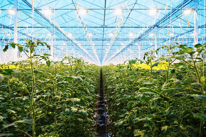 Greenhouse Linde OCAP Lans Co2