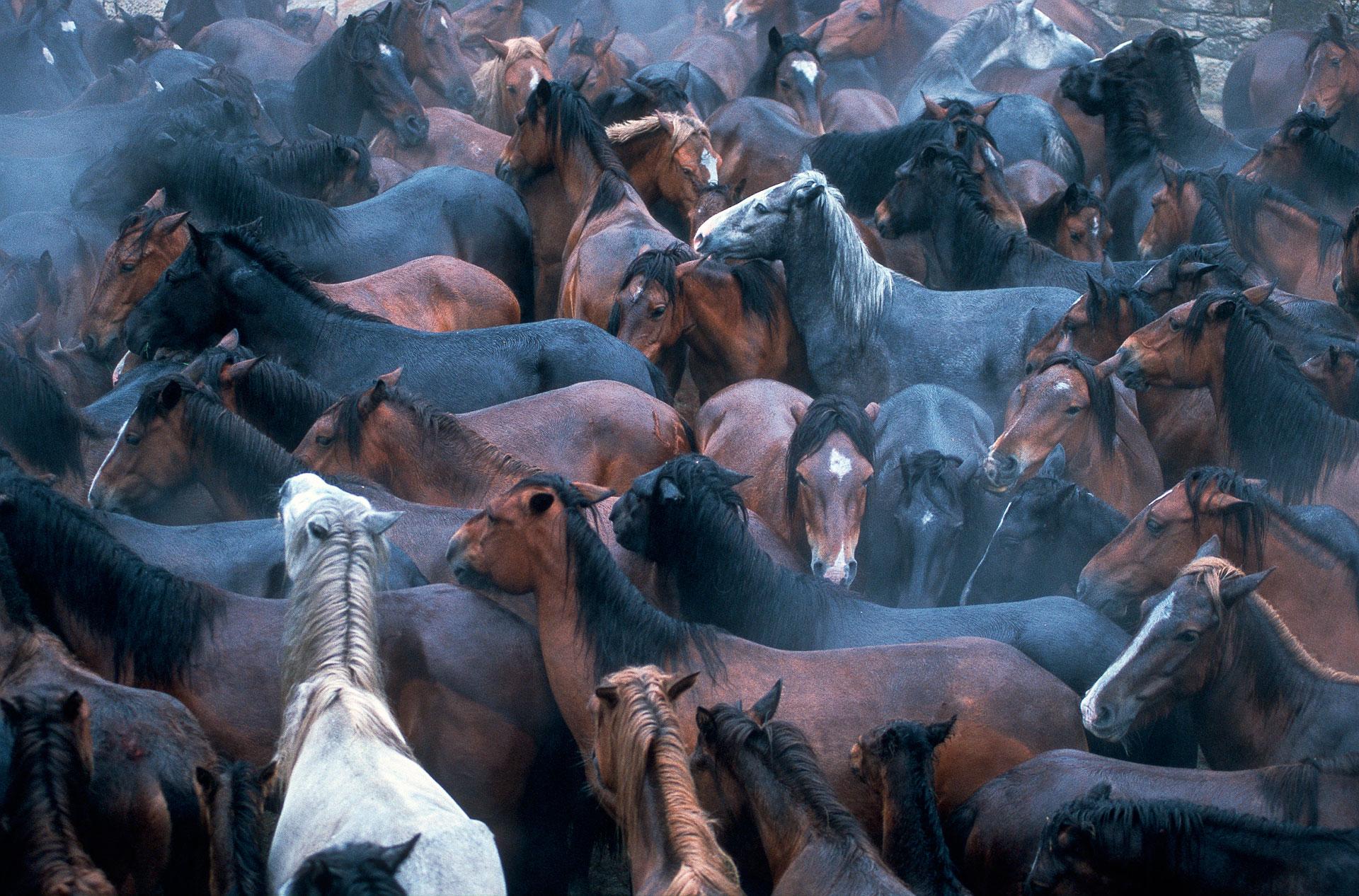 Rapa das Bestas, Spain
