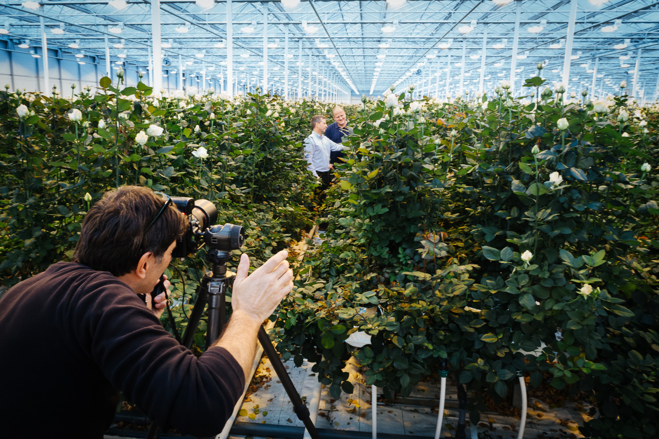 Greenhouse roses the netherlands photographer portrait shooting