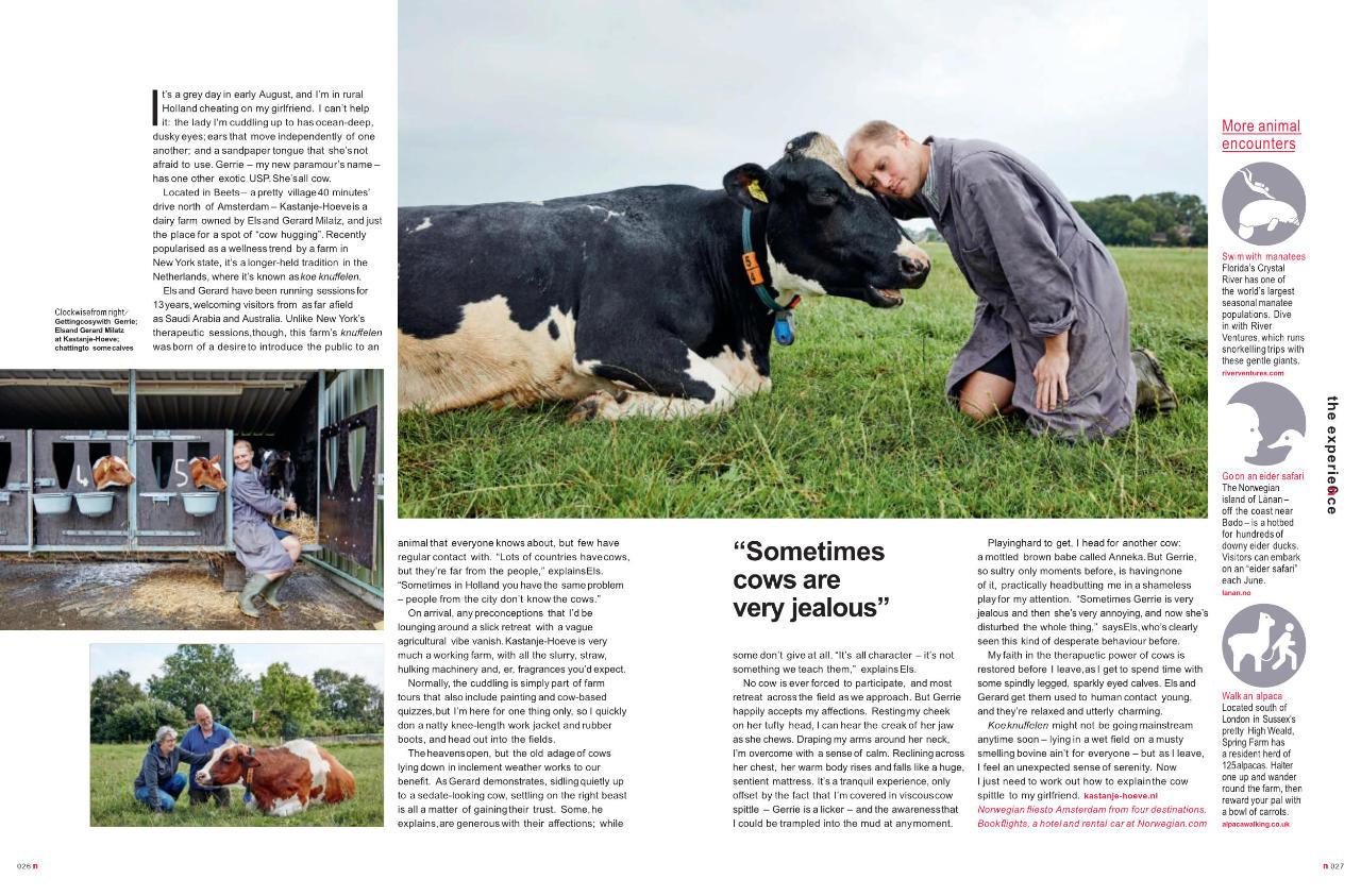 Cow Cuddling